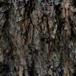 Morrowind Texture Gallery – Jarrod's Bloodmoon Texture Pack